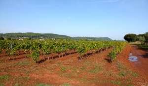 Vente Propriété viticole Le Cannet-des-Maures