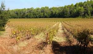Vente Propriété viticole Le Luc