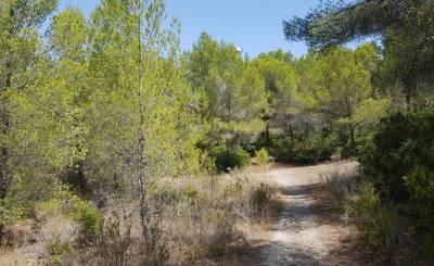 Vente Terrain Santa Ponsa